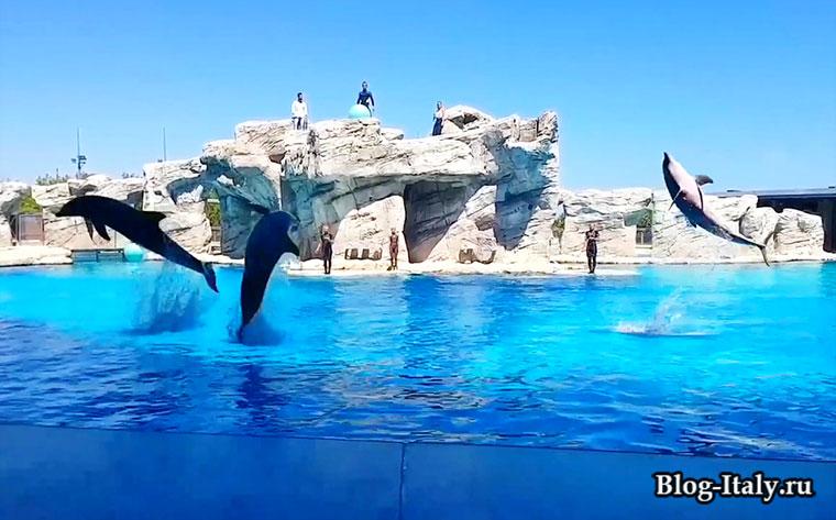 Ольтремаре - дельфинарий