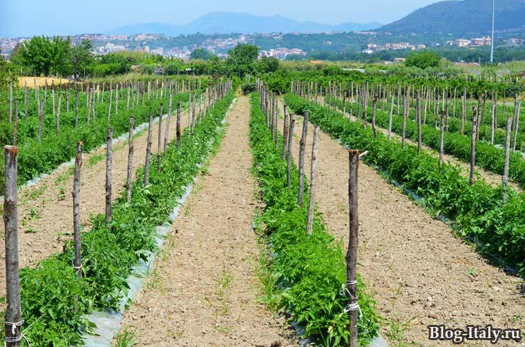 Огород в Италии