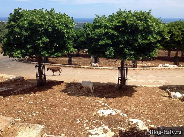 Антилопа в зоопарк Фазано