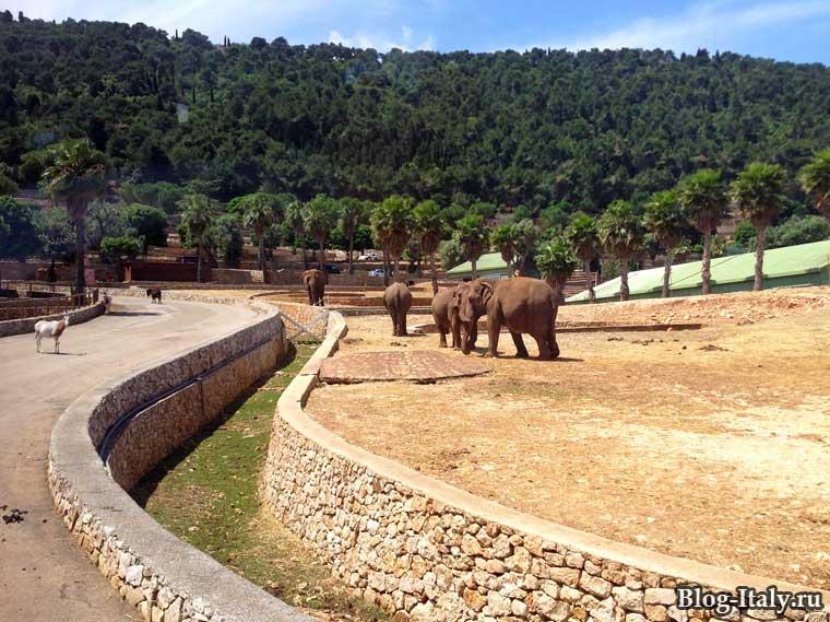 Слоны в зоопарке Фазано