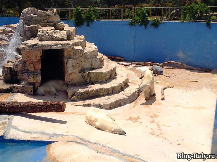 Полярные медведи в зоопарке Фазано