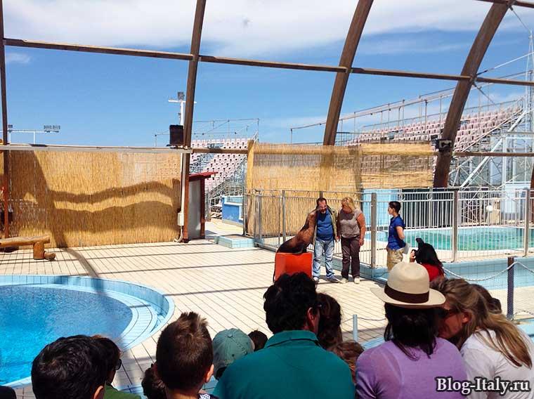 Дельфинарий в зоопарке Фазано