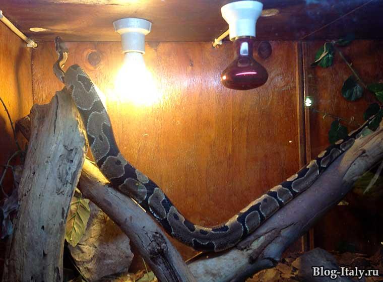 Змея в серпентарии Фазано