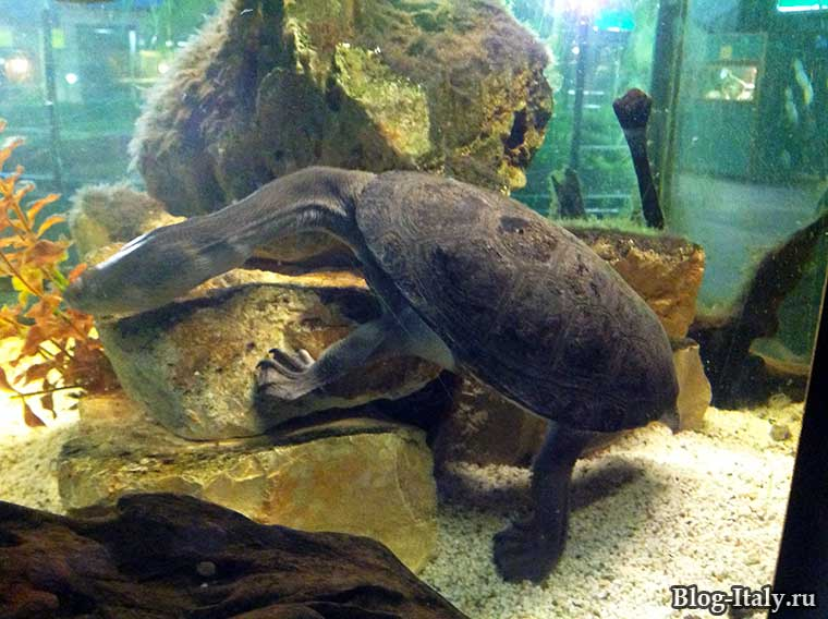 Морская черепаха в зоопарке Фазано